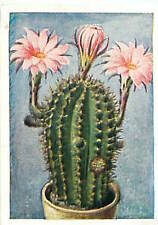 N°175 IMAGE CARD Echinopsis Zuccanini Cactaceae hedgehog cactus  Plant 30s