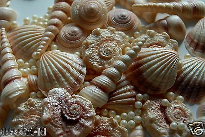 12 SEA SHELLS edible cake cupcake toppers realistic 3-5cm and cream pearls