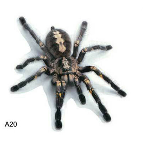 Cool 3D Spider Crawling Car Sticker for Vehicle Truck Window Sticker Hood Decal