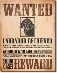 Labrador Retriever USA Metall Vintage Steckbrief Deko Plakat - Neubeuern, Deutschland - Labrador Retriever USA Metall Vintage Steckbrief Deko Plakat - Neubeuern, Deutschland