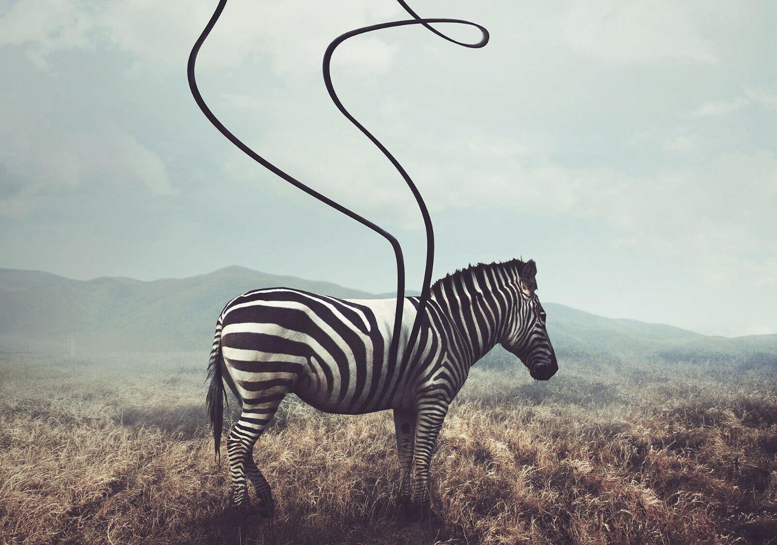 VLIES Fototapete-ZEBRA-(11754)-Savanne Steppe Afrika Pferd Tier Berge Wiese