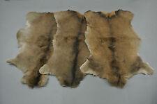 Red deer skin hide rug fur taxidermy decor Peau de cerf Pelle conciata di cervo