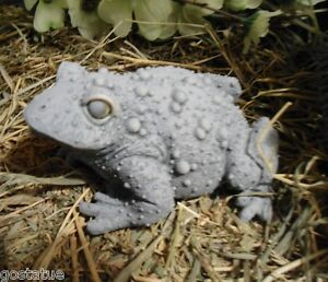 Latex-w-plastic-backup-very-bumpy-toad-frog-mold-5-034-x-4-034-x-2-5-034-H