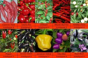 Chili-Pepperoni-Samen-10-Sorten-Schaerfegrad-8-Sehr-Scharf-Feinschmeckersorte