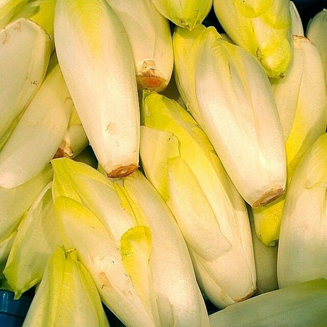 VEGETABLE  CHICORY  DI BRUXELLES  5 GRAM ~ 3400 SEEDS