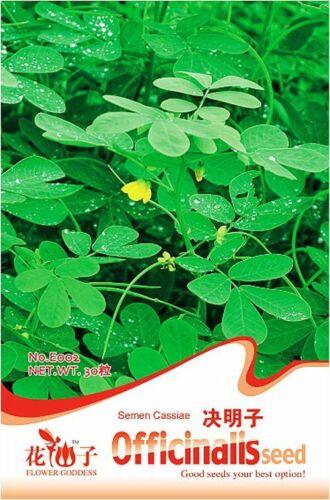 Original Pack 30 Semen Cassiae Seeds Cassia Seed