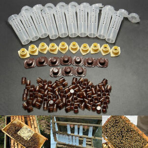Imkerei-Komplettsystem-Koeniginnenzucht-Zucht-Queen-Beekeeping-Bienenfaenger-Kit