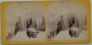 Trota Paesaggio Innevato Morta Foto Stereo Vintage Albumina