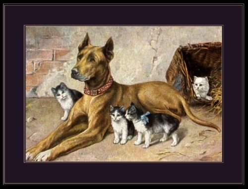 English Picture Print Great Dane Dog Kitten Cat Art