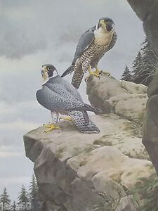 1978-034-PEREGRINES-RETURN-034-GUY-COHELACH-signed-lithographic-print-FALCO-PEREGRINUS
