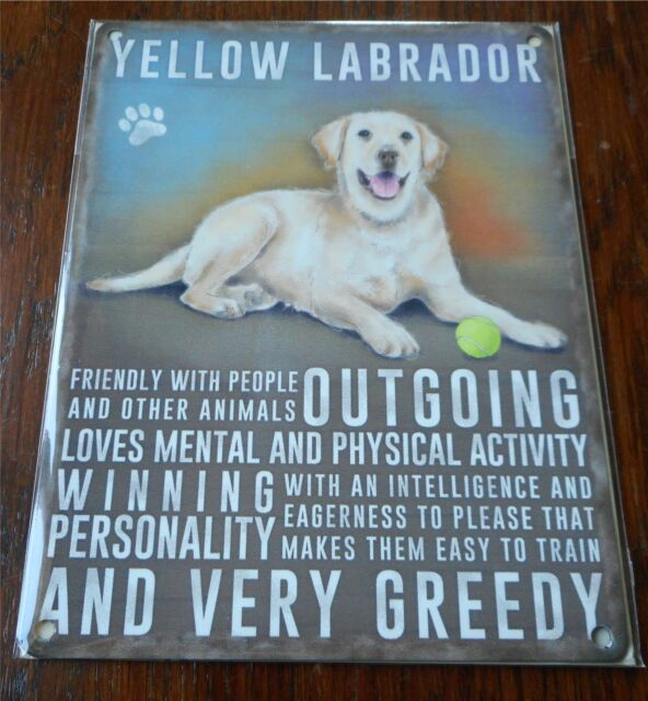 Yellow Labrador Dog Small Metal Wall Sign 200mm X 150mm 90763