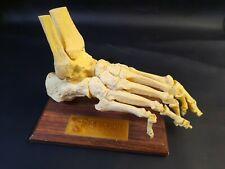 Relafen Foot Skeleton 2 Part Vintage Anatomical Model Pharmaceutical Model