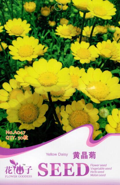 50 Original Package Seeds Yellow Daisy Seeds Chrysanthemum Multicaule A047