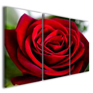 Quadri moderni fiori rose Red rose I stampe su tela canvas rosa ...