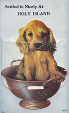 Holy Island near Lindsfarne Dog In Bath Tub Folding Novelty Mailing Postcard