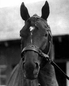 Champion-Racehorse-MAN-O-WAR-Glossy-8x10-Photo-Print-Thoroughbred-Poster