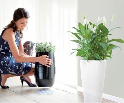 Elho Floor Protector Untsichtbare Untersetzer Rund transparent 10 cm Blumentopf