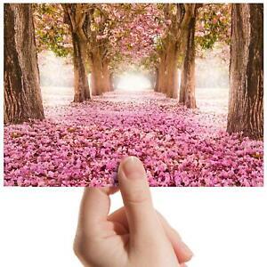 Pink-Shower-Blossom-Small-Photograph-6-034-x-4-034-Art-Print-Photo-Wedding-Gift-8270