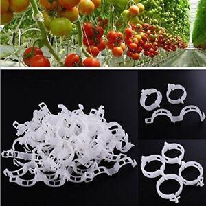 50-100x-Tomaten-Gemuese-Gartenpflanzen-Stuetzclips-fuer-Trellis-Twine-Gewaechshaus