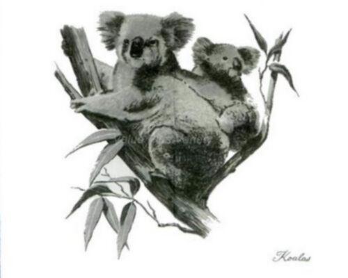Australian Koala Joey Souvenir Cotton Scarf Blue Or Red Designed By Heil