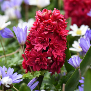 Image Is Loading Bulbs Hyacinth Anemone Plants Hardy Spring Flowering Mix