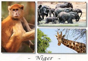 Carte-NIGER-Elephants-Girafe-Singe-Patas