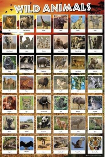 EDUCATIONAL CHART POSTER WILD ANIMALS NEW WALL ART 61X91CM