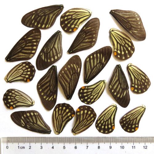Bohemia black mounting insect pins 100pcs size 5 entomology butterflies beetles