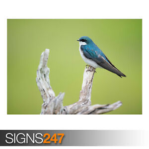 SMALL-BLUE-AND-WHITE-BIRD-AE912-Photo-Picture-Poster-Print-Art-A0-to-A4