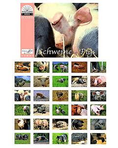 NEU: Postkartenbuch Schweine 30 Postkarten Tiere