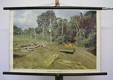 schönes altes Wandbild Bulldozer Urwaldrodung in Brasilien 75x51cm vintage ~1960