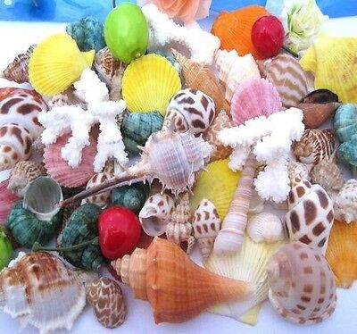 Hot 100g Beach Mixed SeaShells Sea Shells Craft SeaShells Aquarium