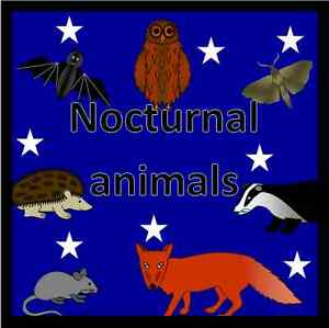 NOCTURNAL ANIMALS topic resource pack on CD- EYFS, KS1 ...