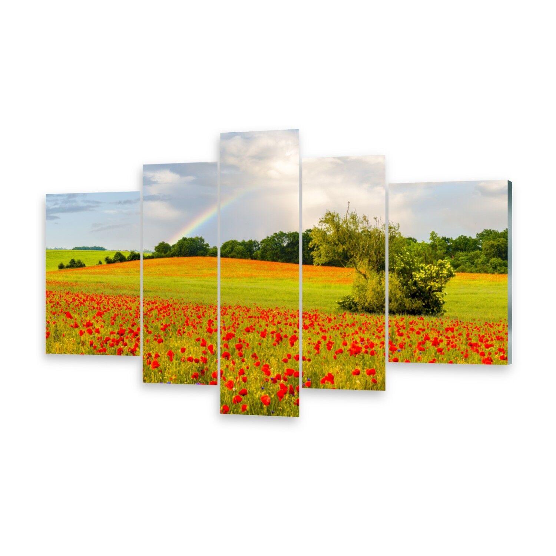Mehrteilige Bilder Glasbilder Wandbild Regenbogen Mohn
