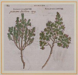 1568-MATTHIOLI-MATTIOLI-BOTANICA-PASSERINA-SANAMUNDA
