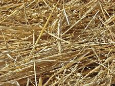 85 g - paja de cebada antialgas para Acuario anti algas peroxido alga