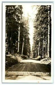 Postcard-The-Forest-Bordered-Olympic-Highway-Clallam-County-Washington-USA
