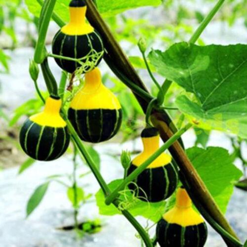 Wholesale Heirloom Vegetable Fruits Seeds Non-GMO Organic Survival Garden Plant