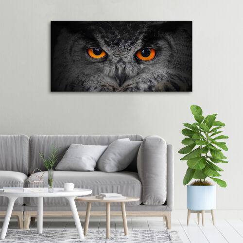 Glas-Bild Wandbilder Druck auf Glas 100x50 Deko Tiere Teufelsaugen Eule