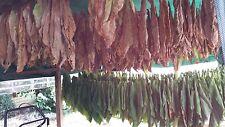 7x1000 graines de tabac 7 variétés Virginia Burley Orient .... Tabac à fumer
