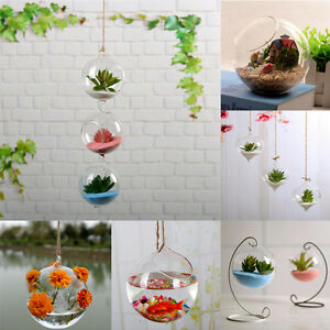 1PCS-Home-Garden-Clear-Glass-Flower-Hanging-Vase-Planter-Terrarium-Container-New