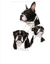 "Boston Terrier MultiDogs Pose in Twelve Identical 6"" Fabric Squares to Quilt-Sew"