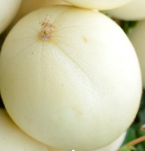 Melon White Style Ribatejo 60 Seeds
