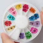 12 Color Nail Art Tips 3D Real Dry Dried Flower UV Gel Acrylic Makeup Tool