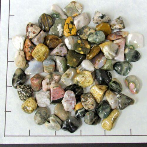 small tumbled 1//2 lb bulk stones Orbicular 55-70 pk OCEAN JASPER