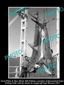 OLD-8x6-HISTORIC-PHOTO-OF-GREAT-WHITE-SHARK-BRING-CAUGHT-IN-1961-GAME-FISHING