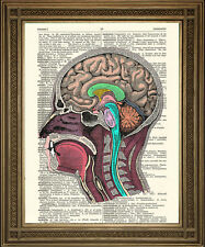 HEAD / BRAIN ANATOMY ILLUSTRATION: Vintage Dictionary Book Biology Art Print