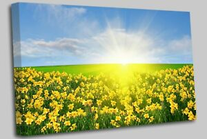 Daffodil-Field-Yellow-Canvas-Wall-Art-Picture-Print