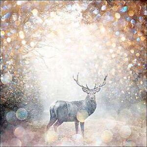 Beau jakobs mystical forest i keilrahmen bild leinwand - Hirsch bild leinwand ...