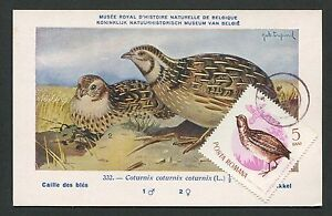 Cooperative Romania Mk 1962 Fauna Wachtel Quail VÖgel Maximumkarte Maximum Card Mc Cm D2768 Extremely Efficient In Preserving Heat Maxi Cards
